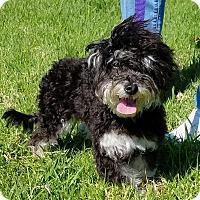 Adopt A Pet :: Sprinkles - Los Angeles, CA