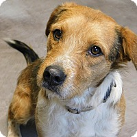 Adopt A Pet :: Jake - mooresville, IN