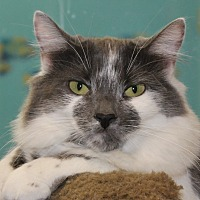 Adopt A Pet :: Silly - North Branford, CT