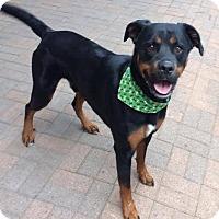 Adopt A Pet :: Maximus - Dallas, TX