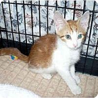 Adopt A Pet :: Busby - Colmar, PA