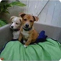 Adopt A Pet :: Dee Dee and Charlie - Los Angeles, CA