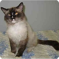 Adopt A Pet :: Reggie - Cincinnati, OH