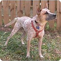 Adopt A Pet :: Leo - Siler City, NC