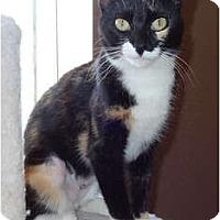 Adopt A Pet :: Maddison - Palmdale, CA