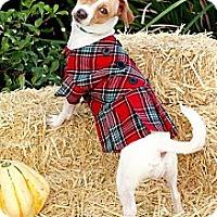 Adopt A Pet :: Joanie - Mission Viejo, CA