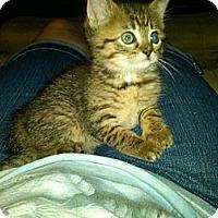 Adopt A Pet :: Fauna - Sterling Hgts, MI