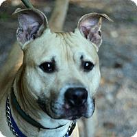 Adopt A Pet :: Wally - Tinton Falls, NJ