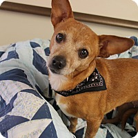 Adopt A Pet :: Gabie - Homewood, AL