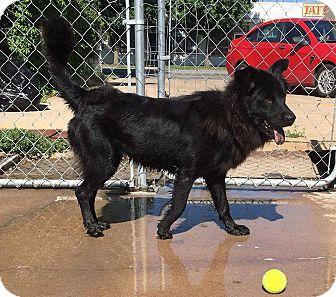 Shepherd (Unknown Type) Mix Dog for adoption in Wichita, Kansas - Stormy