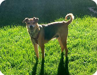 German Shepherd Dog Mix Dog for adoption in Palm City, Florida - Logan