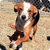 Adopt A Pet :: Julia and Zeta - Lacon, IL