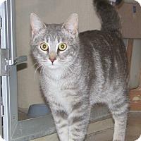 Adopt A Pet :: Antonio - Ruidoso, NM