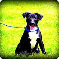 Adopt A Pet :: Remi - Glastonbury, CT