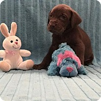 Adopt A Pet :: Truffles - Denton, TX