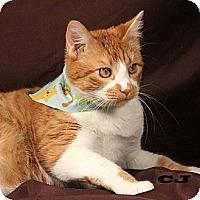 Adopt A Pet :: CJ - Kerrville, TX