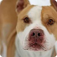 Adopt A Pet :: Ranger - Tinton Falls, NJ