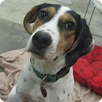 Adopt A Pet :: Squeaky - Lake Odessa, MI