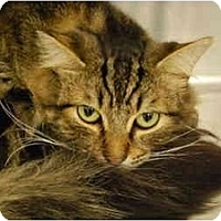 Adopt A Pet :: Sarge - Modesto, CA