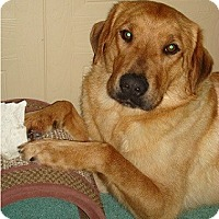 Adopt A Pet :: Shelton - Hamilton, ON