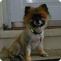 Adopt A Pet :: Fonzie - South Amboy, NJ