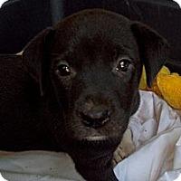 Adopt A Pet :: DELILAH - Glastonbury, CT