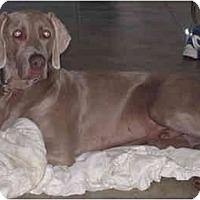 Adopt A Pet :: Noble - Eustis, FL