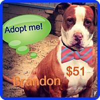 Adopt A Pet :: Brandon - Fowler, CA