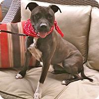 Adopt A Pet :: Cute Daisy - Burbank, CA