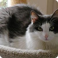 Adopt A Pet :: Della - Anacortes, WA