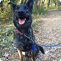 Adopt A Pet :: REMI - Winnipeg, MB