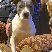 Adopt A Pet :: Madre - East Randolph, VT