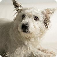 Adopt A Pet :: Rosalinda - Inglewood, CA
