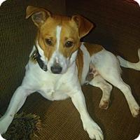 Adopt A Pet :: Winston in Houston - Austin, TX