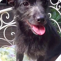 Adopt A Pet :: Anchovy - Los Angeles, CA