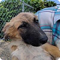 Adopt A Pet :: Bristol - Pleasanton, CA