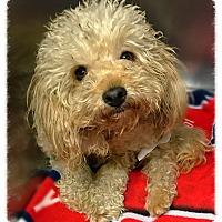 Adopt A Pet :: Tig - Los Alamitos, CA