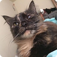 Adopt A Pet :: Paisley - Richmond, VA