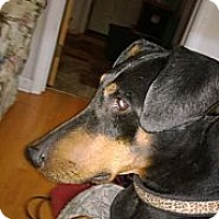 Adopt A Pet :: Mia - Allegan, MI