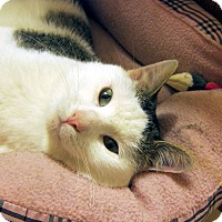 Adopt A Pet :: Henry (loves to be held) - Roseville, MN