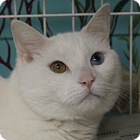 Adopt A Pet :: Tommy - North Branford, CT