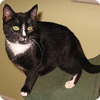 Adopt A Pet :: Simon - Colmar, PA
