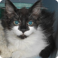 Adopt A Pet :: Dolly - Chattanooga, TN