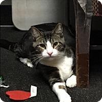 Adopt A Pet :: Yin -Adoption Pending - Arlington, VA
