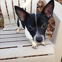 Adopt A Pet :: Beetle - Charlotte, NC