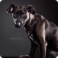 Adopt A Pet :: Sophie - Huntsville, AL