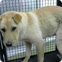 Adopt A Pet :: URGENT on 4/29 @DEVORE - San Bernardino, CA
