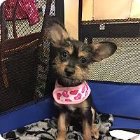 Adopt A Pet :: Ariel - Brea, CA