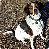 Pointer Mix Dog for adoption in richmond, Virginia - Horace