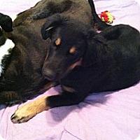 Adopt A Pet :: Sammi - Nashville, TN